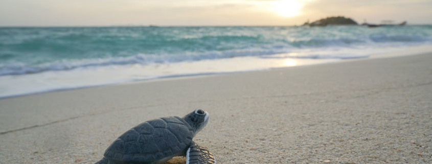 Turn Down the Lights for Sea Turtle Nesting Season
